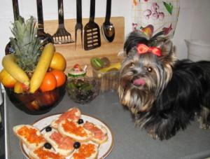 Чем нельзя кормить щенка йоркширского терьера