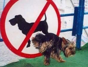 Как не стоит проводить прогулки с собакой