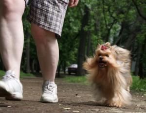 Правильные прогулки с собакой