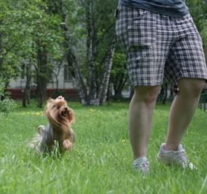 Прогулки с собакой или веселое время препровождение