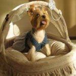 Как сделать кровать для собаки — обустройство места для собаки в доме