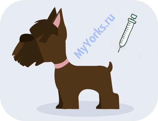 когда делать прививку щенку йорка
